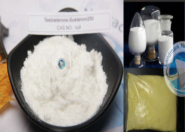 China Testosterone Sustanon 250 Injection , Popular Raw Muscle Gain Powder distributor